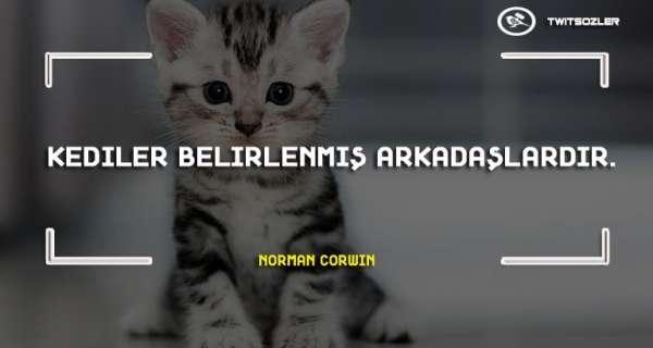 Kediler İle İlgili Sözler ve Alıntılar