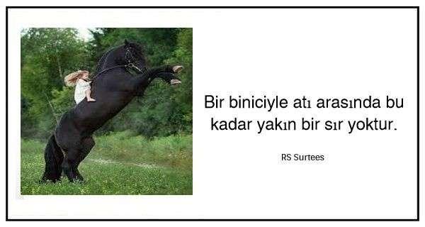 At Binme Sözleri ve Alıntıları
