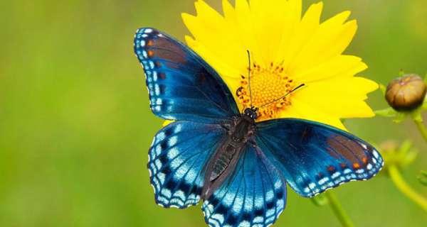 Kelebekler ile İlgili Sözler ve Alıntılar