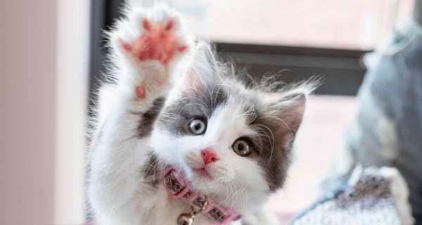 Kediler hakkında en iyi sözler ve alıntılar